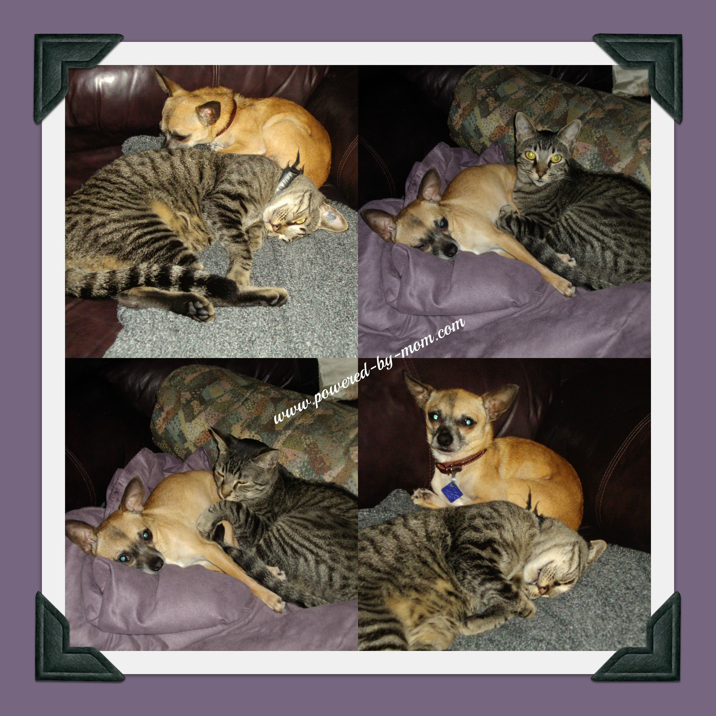 Tips for helping your cats and dogs get along