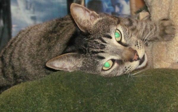Oliver Cat