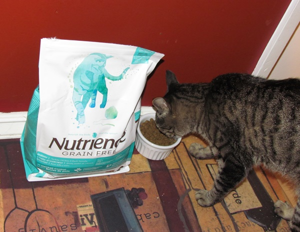 Oliver and his grain-free Nutrience