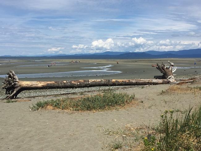 Parksville Beach log