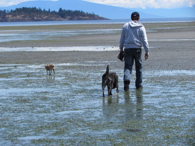 beach with dogs