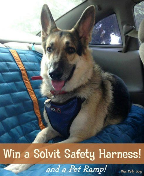 saftey harness