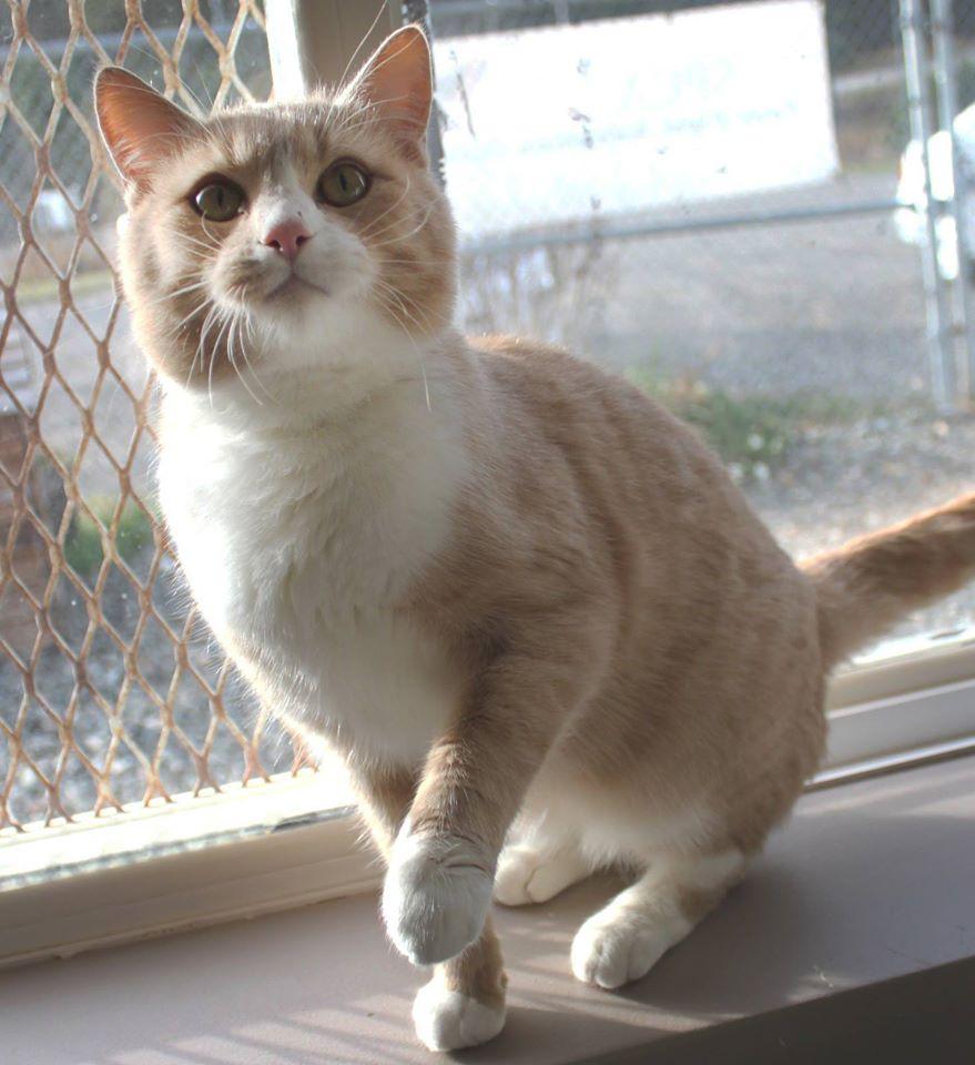 Adopt A Pet- Meet Peter