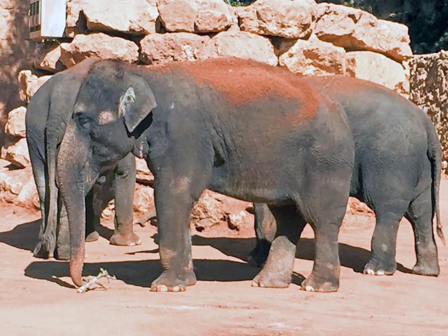 elephants biblical zoo