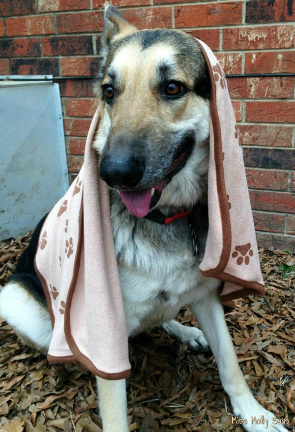 luv-emmas-dry-pets-microfiber-towel