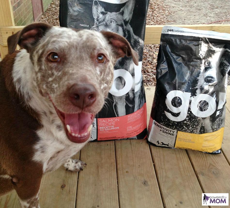 heeler-pit-mix-with-petcurean-sensitivity-plus-shine-go-dog-food-4