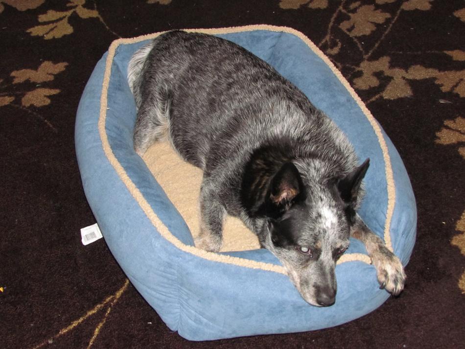 pet-bed