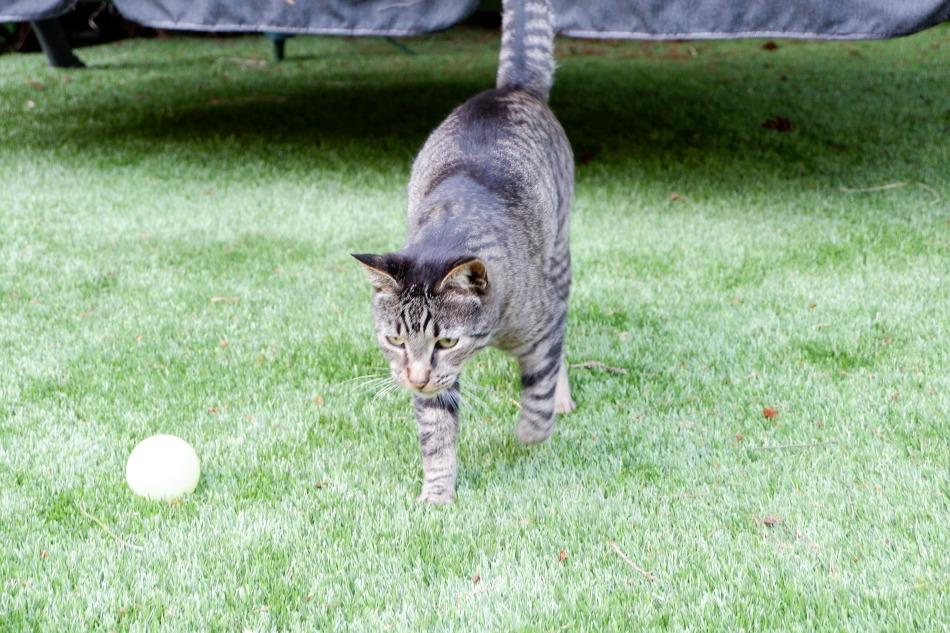 Oliver the Cat - pet food ingredient sourcing