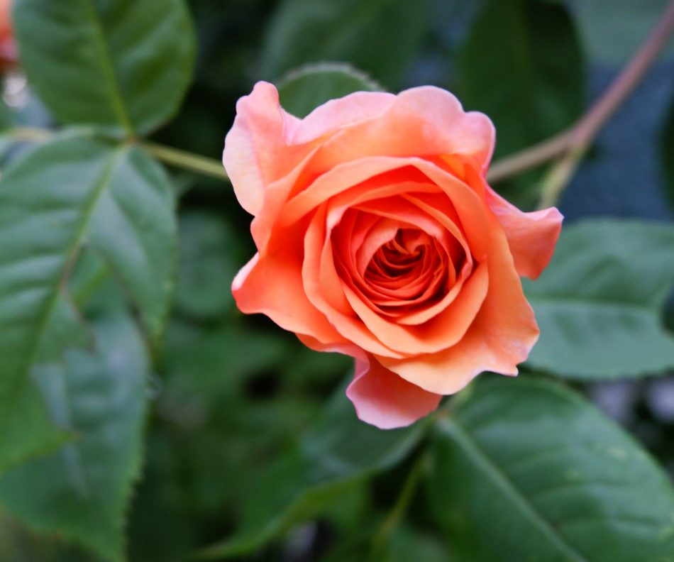 Women and Self Care Smell the Roses