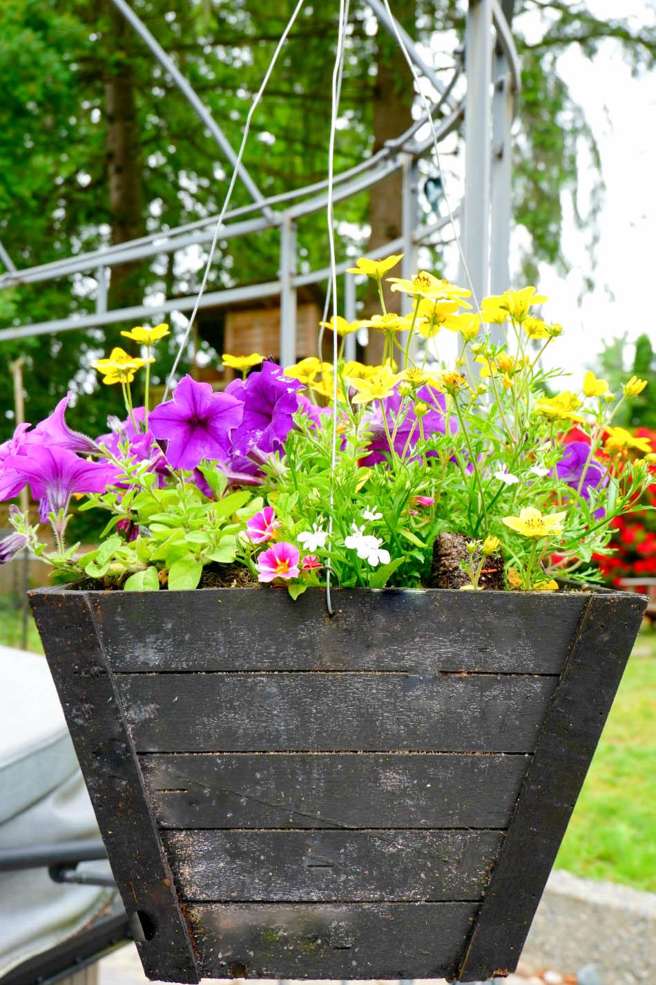 backyard hanging basket