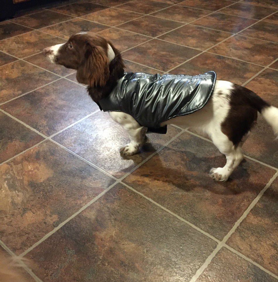 silver aspen puffer coat,charli,up country