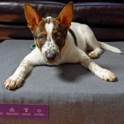 WOOF: Why your dog wants a Purple Dog Bed
