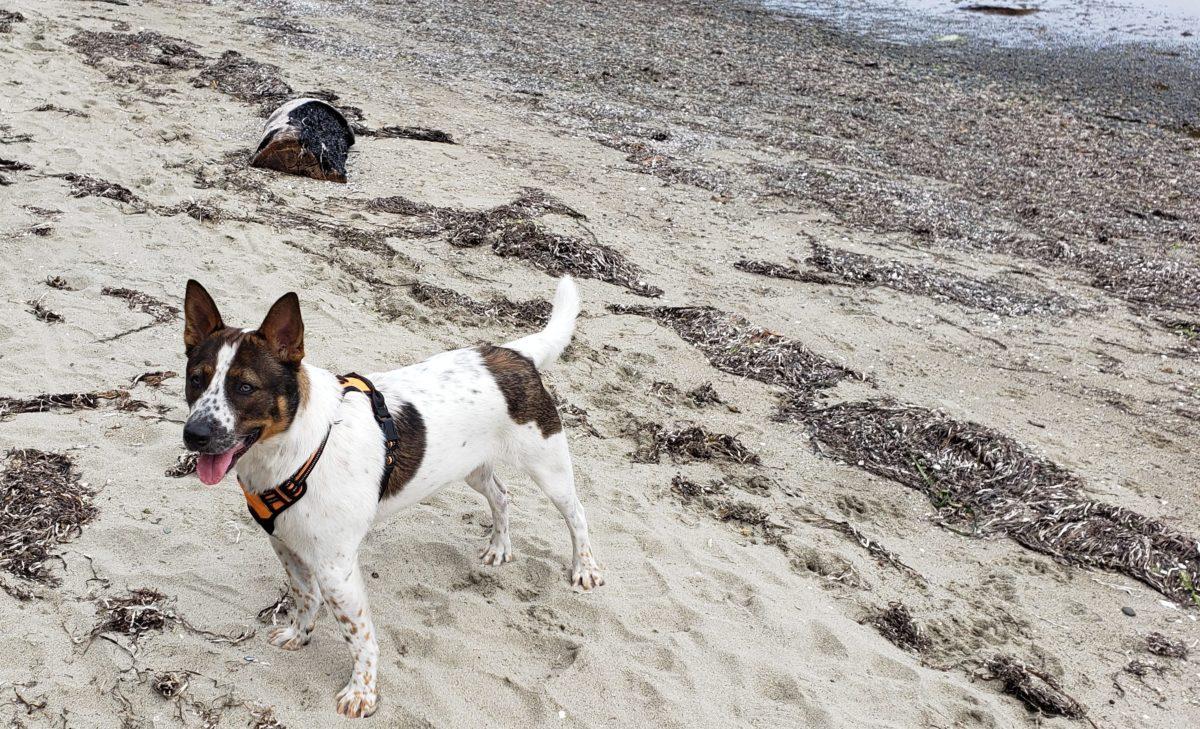 apollo the rescue dog