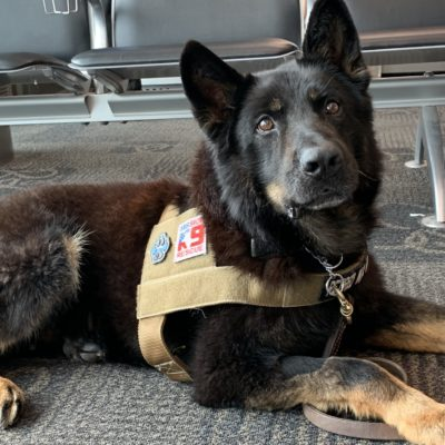 Working Dogs – The Golden Years