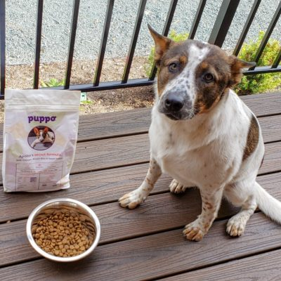 Why Puppo Dog Food is Great for All Dogs