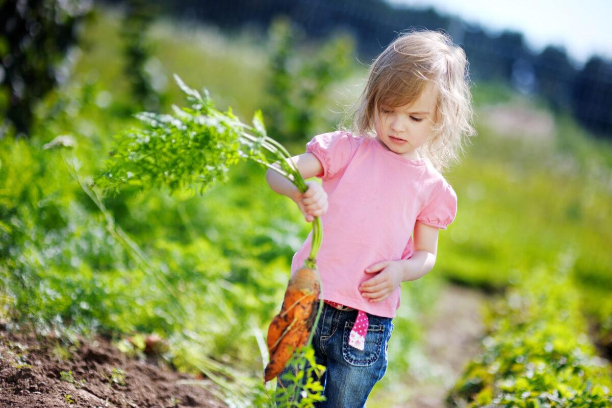 young girl gardening carrots