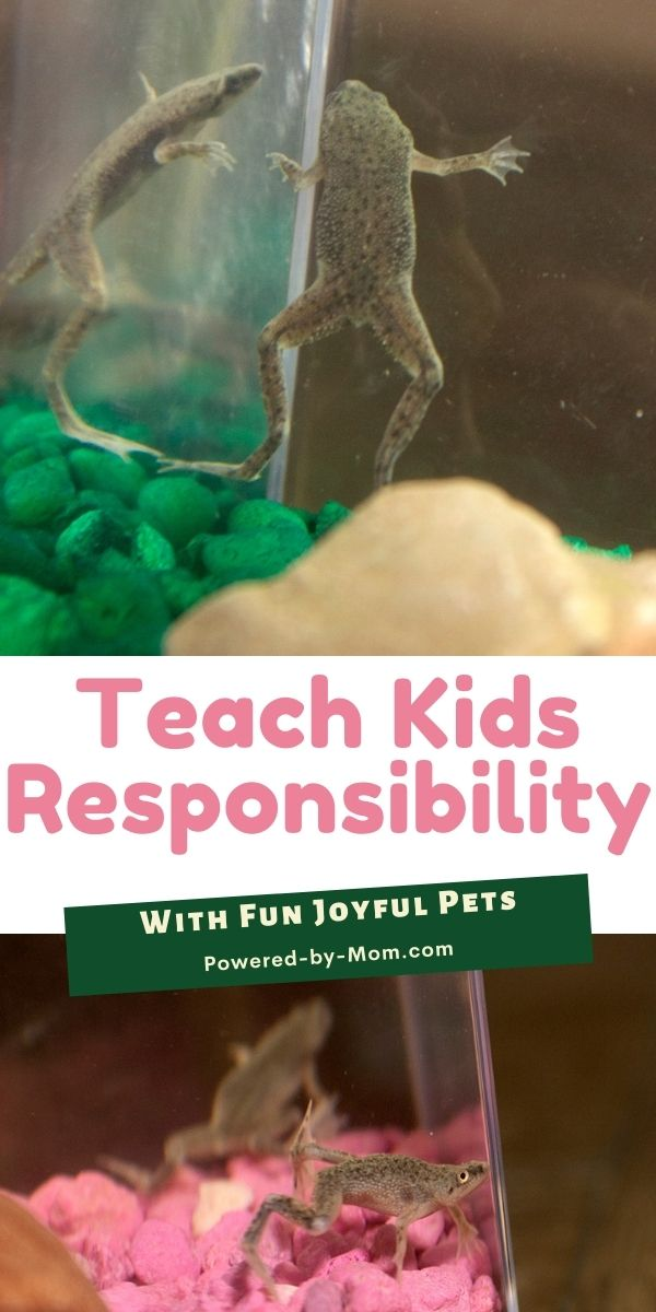 Have you ever considered African Dwarf Frogs as pets? Learn what joyful pets these are and how they promote responsibility.