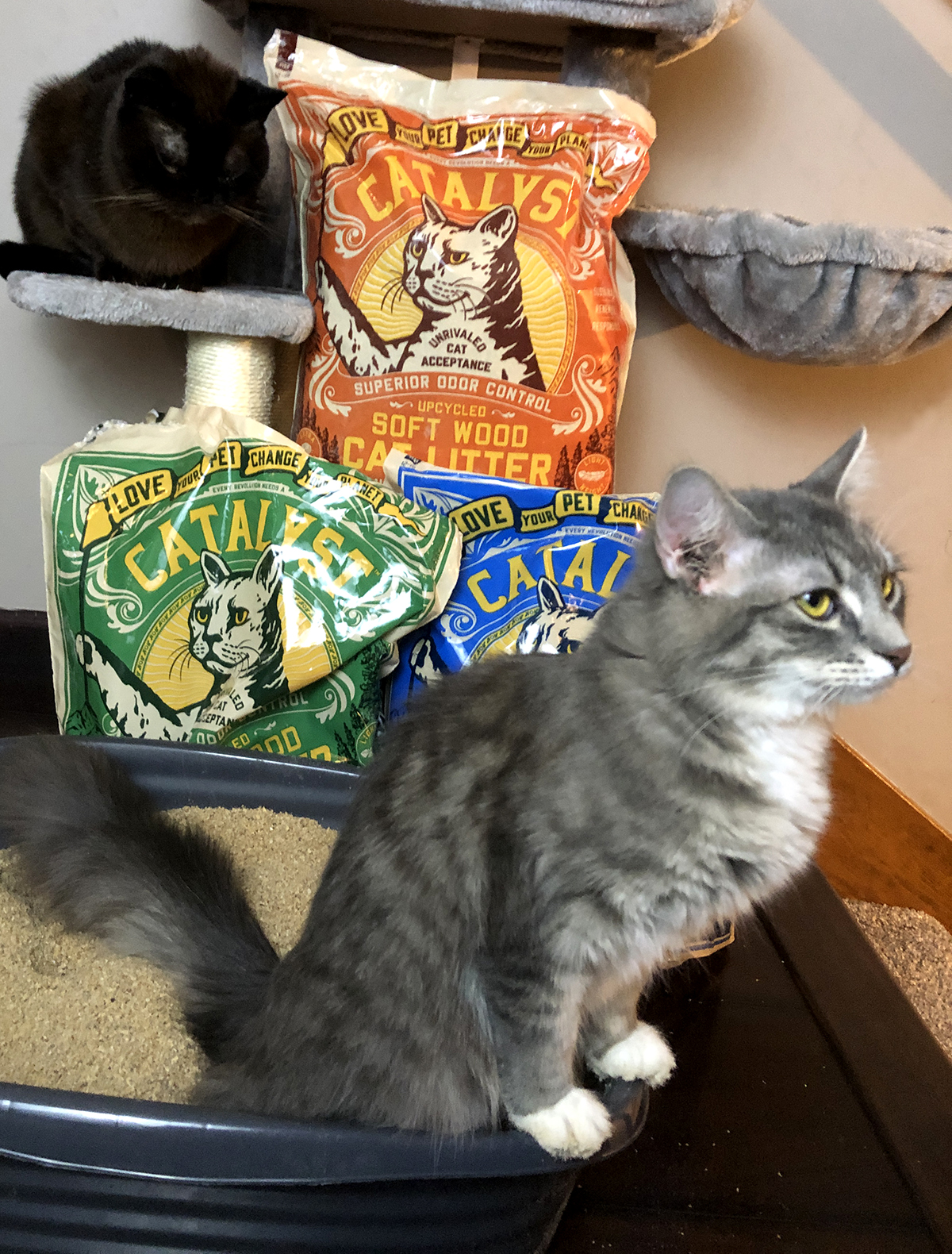 Eco-Friendly Pet Supplies