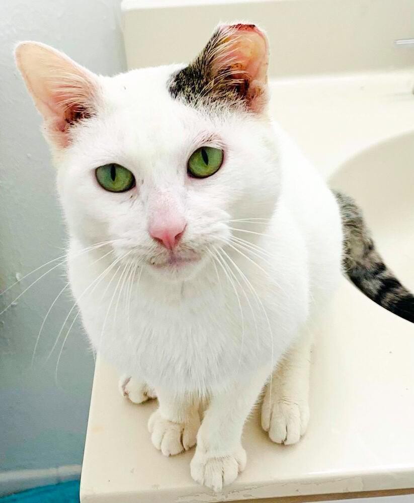 Louie the cat