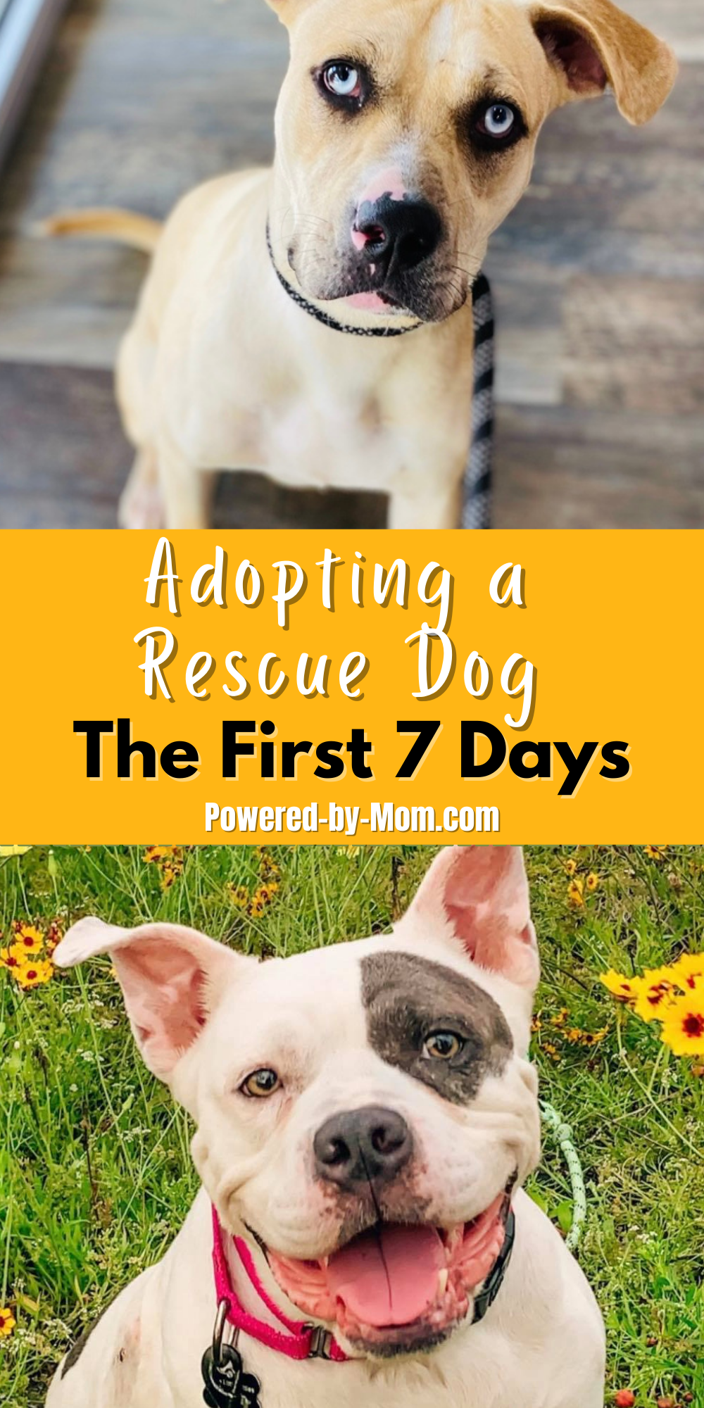 If you are adopting a rescue dog, the first seven days are a crucial time for both you and your dog. It will be a period of adjustment.