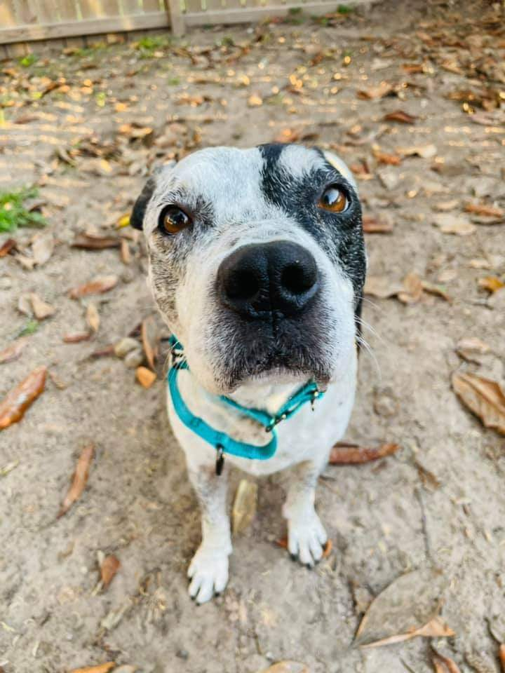 adopting a rescue dog the first seven days